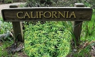 Prop 19 fails in California